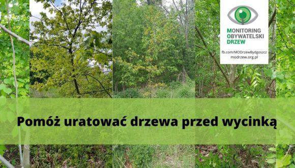 Как защитить деревья в городе? Опыт ассоциации MODrzew — Гражданский мониторинг деревьев в Быдгоще